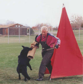 German Shepherd grip work training