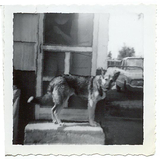 Bingo, our first German Shepherd in 1969, notice the year of the car in background