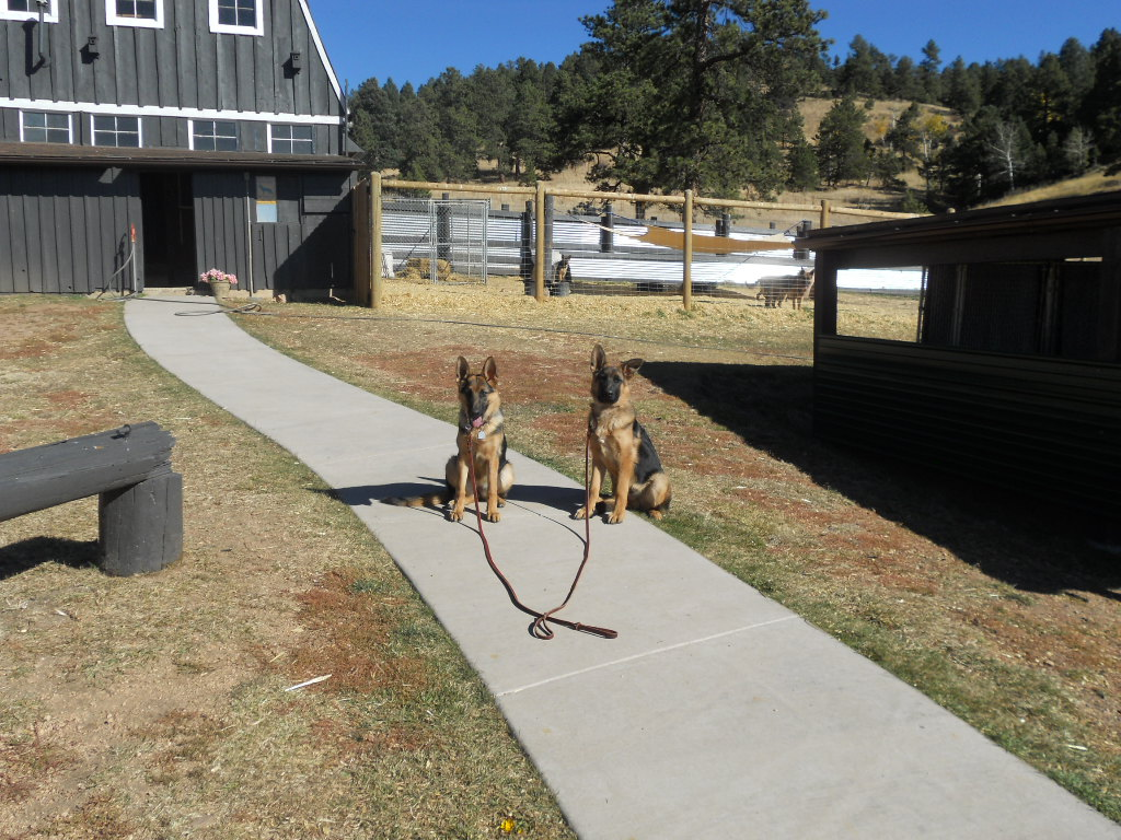 Dog Training In Colorado